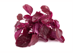 IngRed spinach extract
